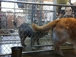 Dog's view of Kennels