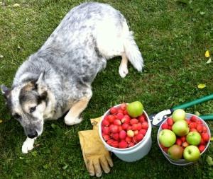 Lady&Apples2014