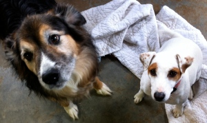 Rocky & Spike