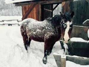 Bud-snowCoat