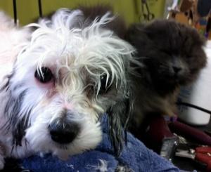 Snoopi&Smokey