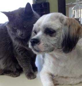 Buddy, with Smokey