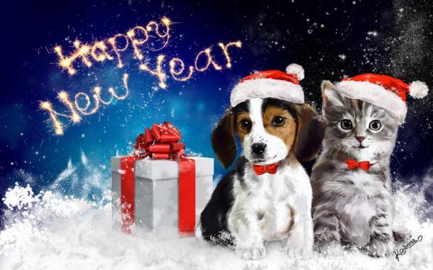 1387698138_dog cat.jpg