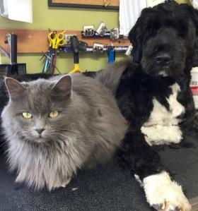 Binou&Smokey
