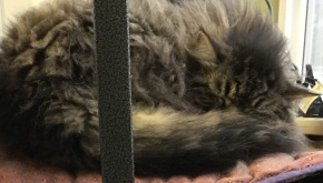Update on the late cat Jack…