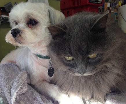 Jack and Smokey