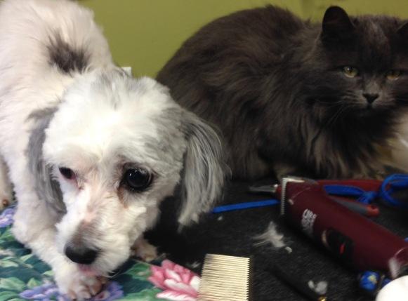 Snoopi&Smokey.jpg