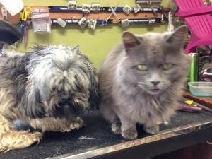 Brutus&Smokey
