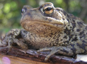 toad-on-wood1-JH-1024x766