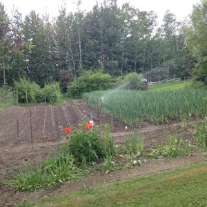 VegetableGarden2-2016