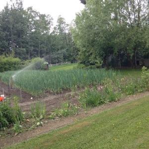 VegetableGarden3-2016