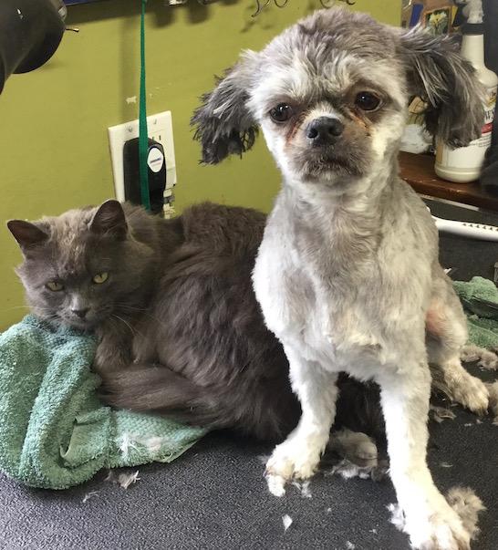 Chloe&Smokey2016
