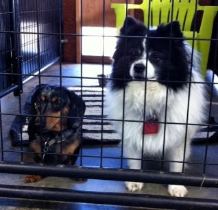 Seltzer&MayaPoundPuppies