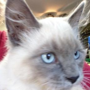 Happy Cat Week at the Pet Hostel…