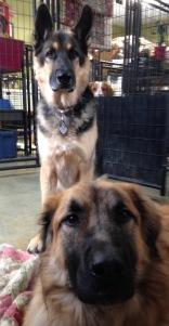 Jasper & Timber