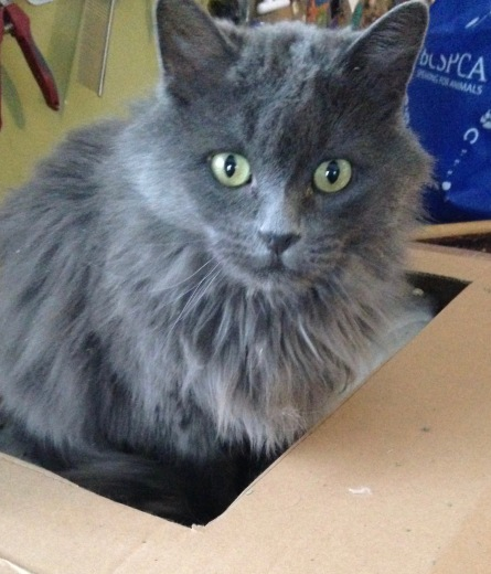 Smokey in box
