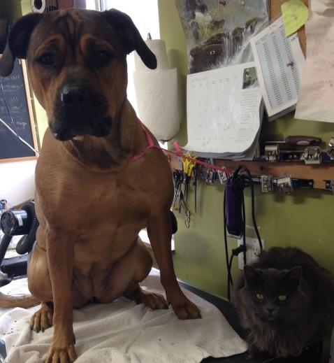 Sasha&Smokey