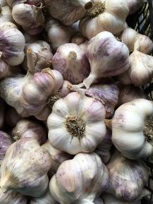 Garlic 2017