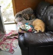 Dexter&JazzminNewCouch