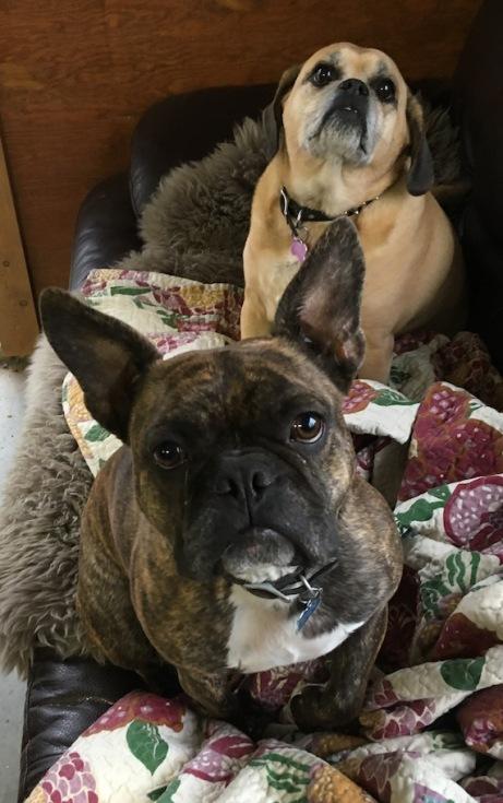 Dexter&JazzOnCouch