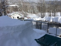 Snow atop the dog runs