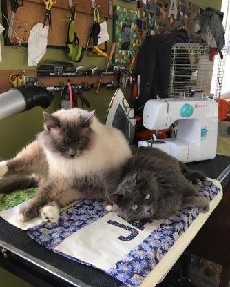 Sam&SmokeyOnNewDoggyBlankets