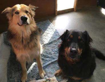 Archie&Shiloh