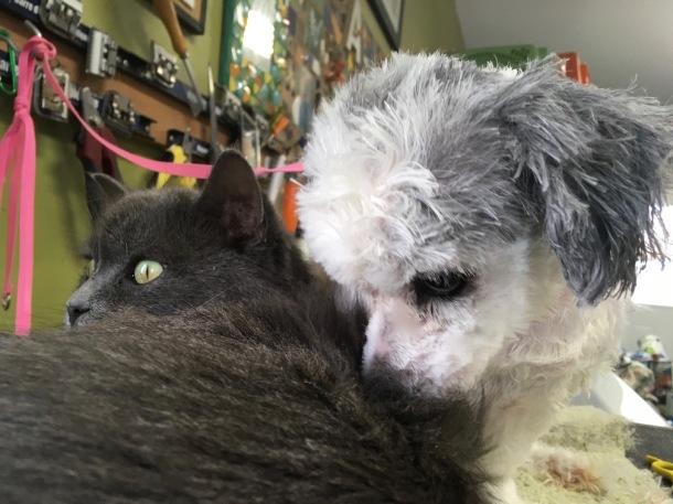Snoopi nuzzles Smokey