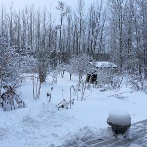 Snow days …